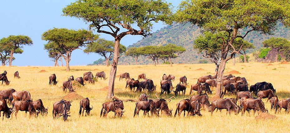 De Zomba au lac Malawi: safaris et plages au Malawi