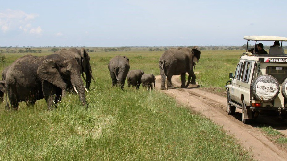 De Samburu à Masaï Mara: à la rencontre des grands mammifères