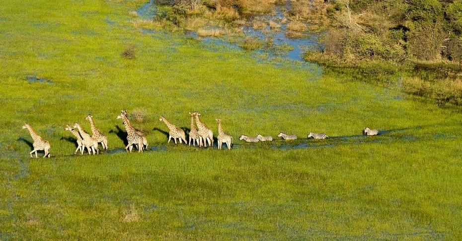 Rencontre avec les grands mammifères africains au delta de l'Okavango
