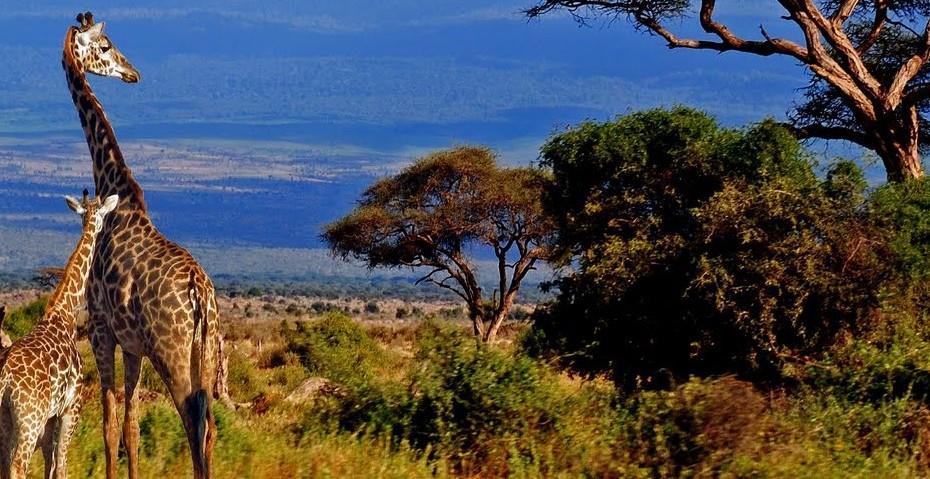 Tanzanie, du Serengeti au Ngorongoro: À la rencontre des «Big Five»