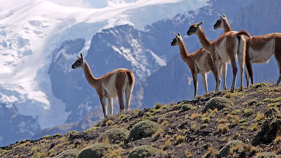 Road trip entre l'Argentine et le Chili