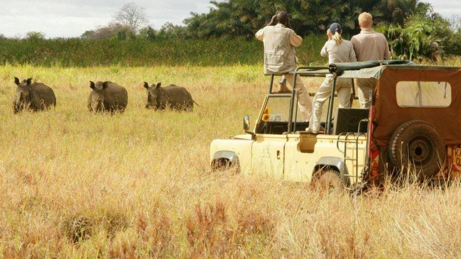 Treks en Ouganda : rencontre avec les gorilles et les grands mammifères