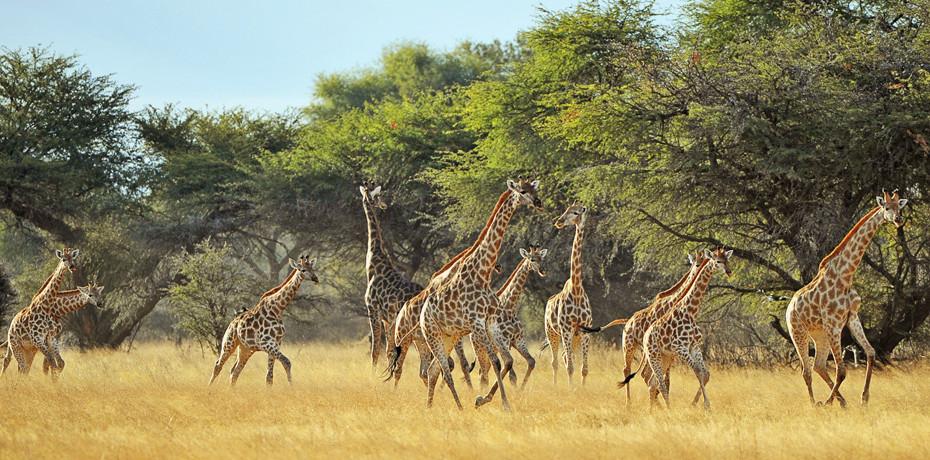Safaris au Zimbabwe : Des Chutes Victoria au Parc Hwange
