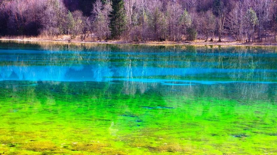 Cinq-fleur-de-lac-la-vallée-de-Jiuzhaigou-la-Chine