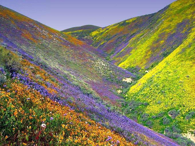 Vallée-des-fleurs-Uttarakhand-en-Inde