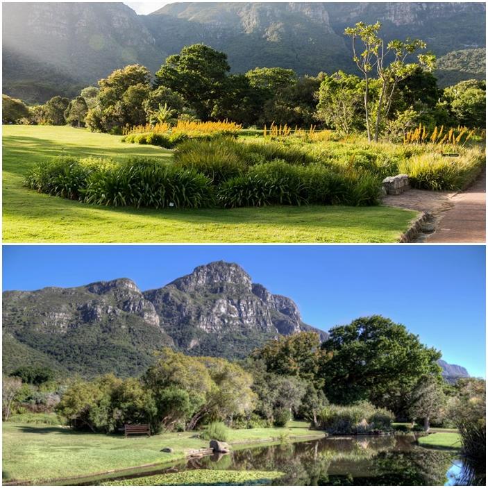 montage jardin afrique du sud cap kirstenbosch