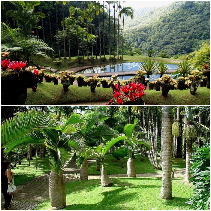 Le jardin Balata en Martinique.