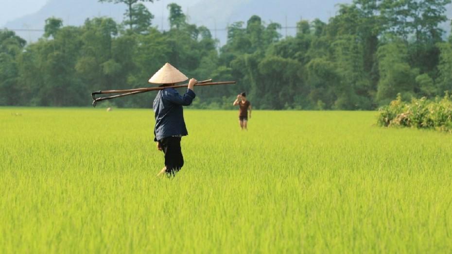 Vietnam : À la rencontre des peuples des montagnes