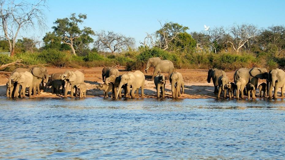 Désert, safari et plage en Afrique australe