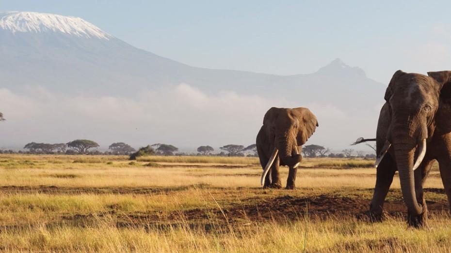 Kenya : Safaris à Masai Mara et plongée à Diani