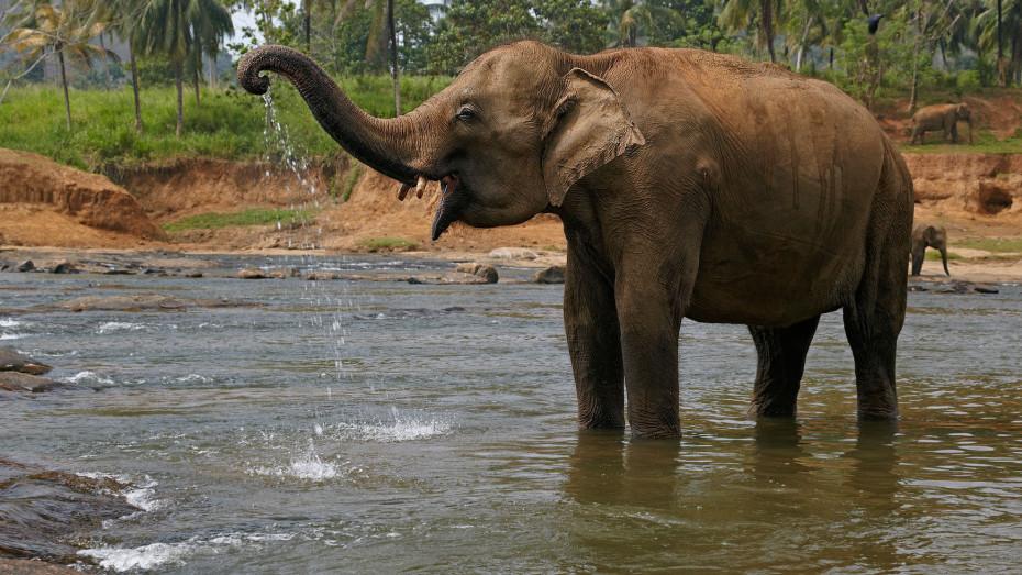 D'Oman au Sri Lanka: Dunes de sable et forêt tropicale