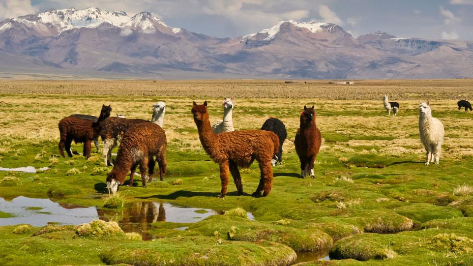 Du Pérou à la Bolivie: Déserts de sel, vestiges incas et cités coloniales