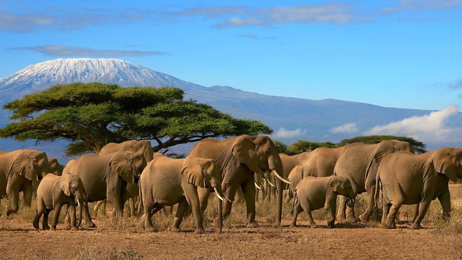 À la conquête du Kilimandjaro