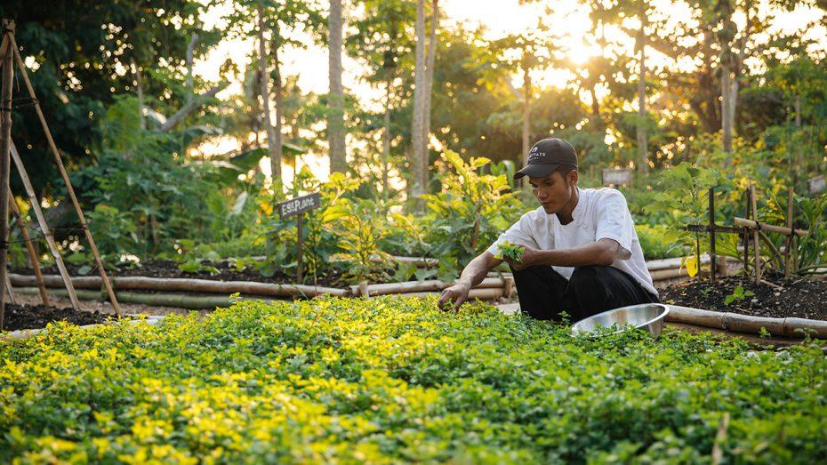 Développement durable et détente: votre séjour unique dans le «Meilleur Hôtel du Monde»